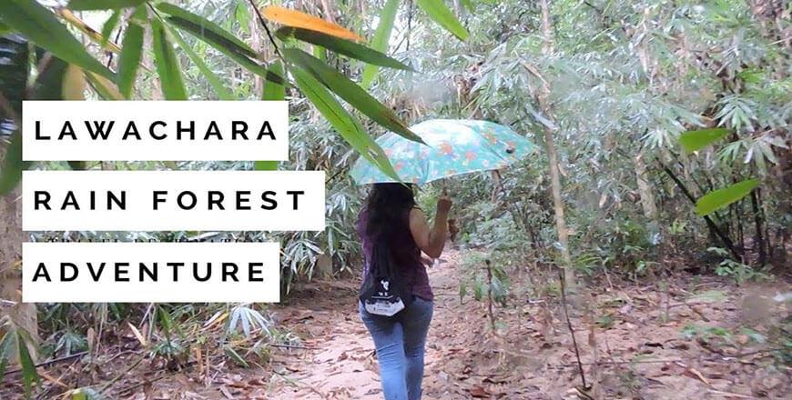 Lawachara Rainforest National Park at Kamalganj in Moulvibazar