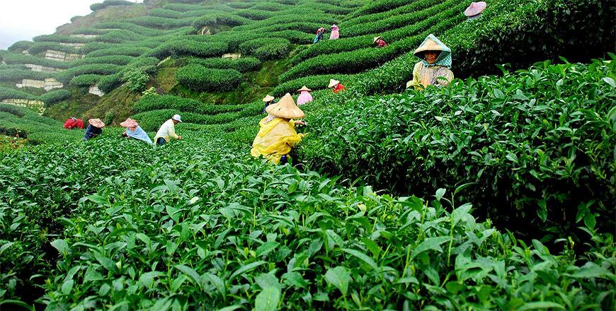 Sreemangal Tourist Spots | The Tea Capital of Bangladesh